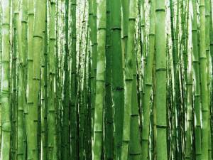 vista-wallpaper-bamboo